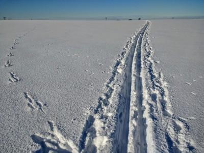 cross-country-skiing-2081268_960_720
